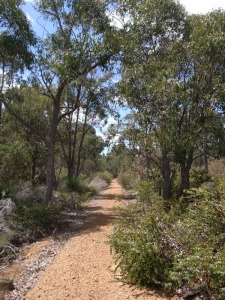 Rail trail into Nannup