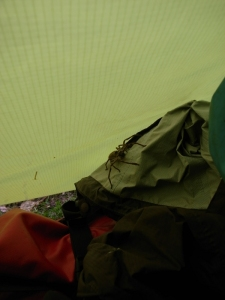 The real thing! Woke up to find this large huntsman hovering over my face on the outside of the tent mesh - fortunately!